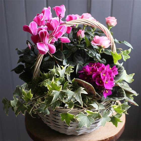 A Pink Flowering Basket